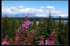 Alaska011