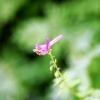 Flower 0