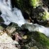 Water Spring 0